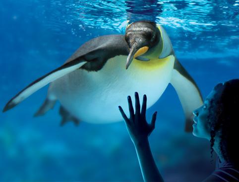 Dubit Penguin